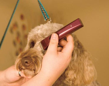 Wahl BravMini+ Professional Cordless Pet Trimmer