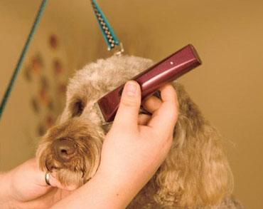 Wahl BravMini+ Professional Cordless Pet Trimmer