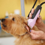 Andis EasyClip Dog Clipper Review