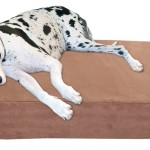 Dog Bowls - Size And Height Requirements