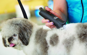 Andis LightSpeed Dog Clipper