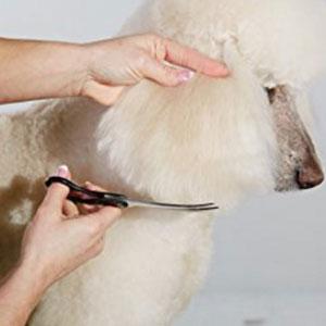 Andis Premium Pet Grooming Tools