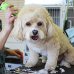 10 Tips For Grooming Your Dog