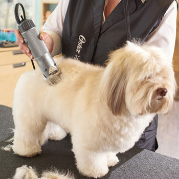 Dog clippers buyers guide dog clipper reviews how to choose best dog clippers for your dog grooming solutioingenieria Image collections