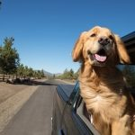 Traveling With Your Dog - Some Great Tips